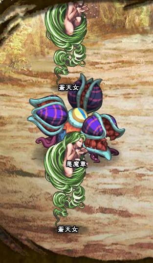3回目。 蒼天女×2 悪魔草